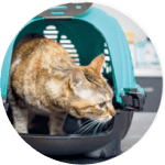Out of hours advice and emergencies at Jollyes community pet clinic
