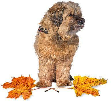Weather Season Autumn Dog Care