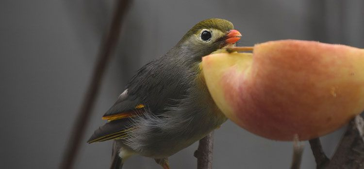 What to feed your birds