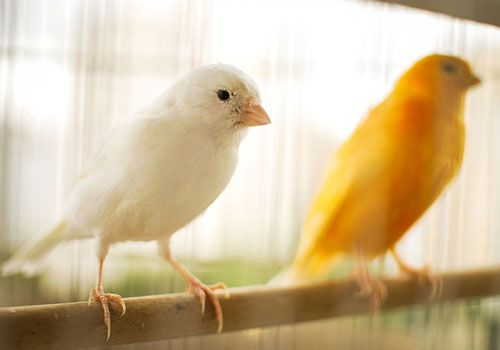 Bringing your bird home