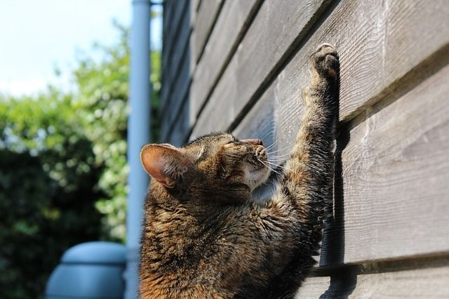 Cat Scratching Shed