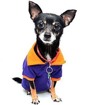 Do dogs need to wear coats?