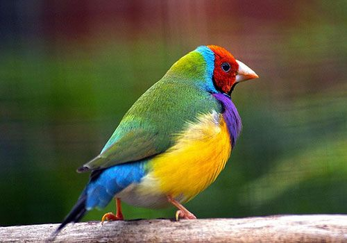 outside avaries